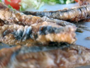 Rhodos Kleine Fische